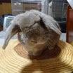 ウサギさんの 病院選びの 難しさ。
