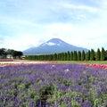 茶トラにゃんこミーと仙台の空