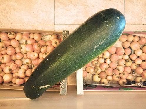 2019-verduras gigantes-4