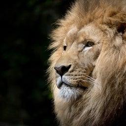 画像 ライオン先生の本当の幸せとは何か?を本気で考えてみました。 の記事より 18つ目
