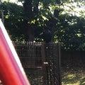「  今朝の木陰 」