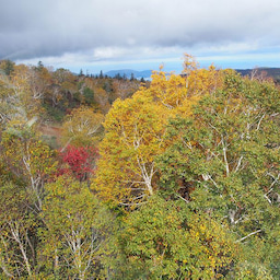 画像 ゴンドラで秋の空中散歩 札幌国際スキー場秋祭り の記事より 18つ目