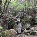 瓢ヶ岳②~山頂についたものの…
