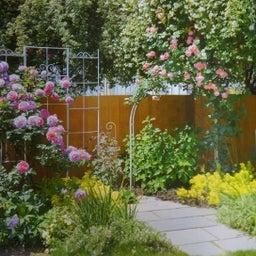 画像 咲きはじめたクロードモネ♪「ガーデン&ガーデン」発売 の記事より 2つ目