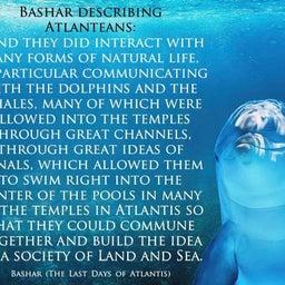 画像 バシャール:アトランティス人は イルカやクジラたちと一緒に集う機会を持っていました の記事より