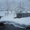 冬に突入ですかね~^^;;の画像