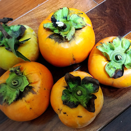 画像 今日の目玉焼き朝ごはんと柿が豊作! の記事より 2つ目