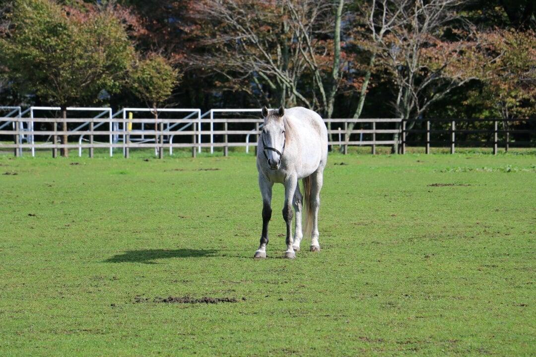 KbpnoのブログAERUの馬たちに会えました  ~ その2 ~