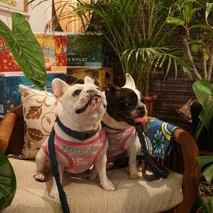 カフェ&ペットホテル SILLYの画像