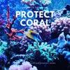 珊瑚を殺す日焼け止めの画像
