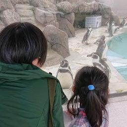 画像 音楽会とペンギン の記事より 2つ目