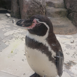 画像 音楽会とペンギン の記事より 3つ目