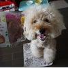 ファミマの安納芋シュークリームの画像