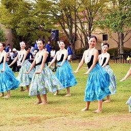 画像 関西学院大学三田キャンパスの大学祭でフラサークルのステージを取材! の記事より 14つ目
