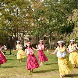 画像 関西学院大学三田キャンパスの大学祭でフラサークルのステージを取材! の記事より 4つ目