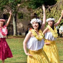 画像 関西学院大学三田キャンパスの大学祭でフラサークルのステージを取材! の記事より 5つ目