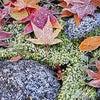 令和元年霜降(そうこう)の季節のトリートメントの画像