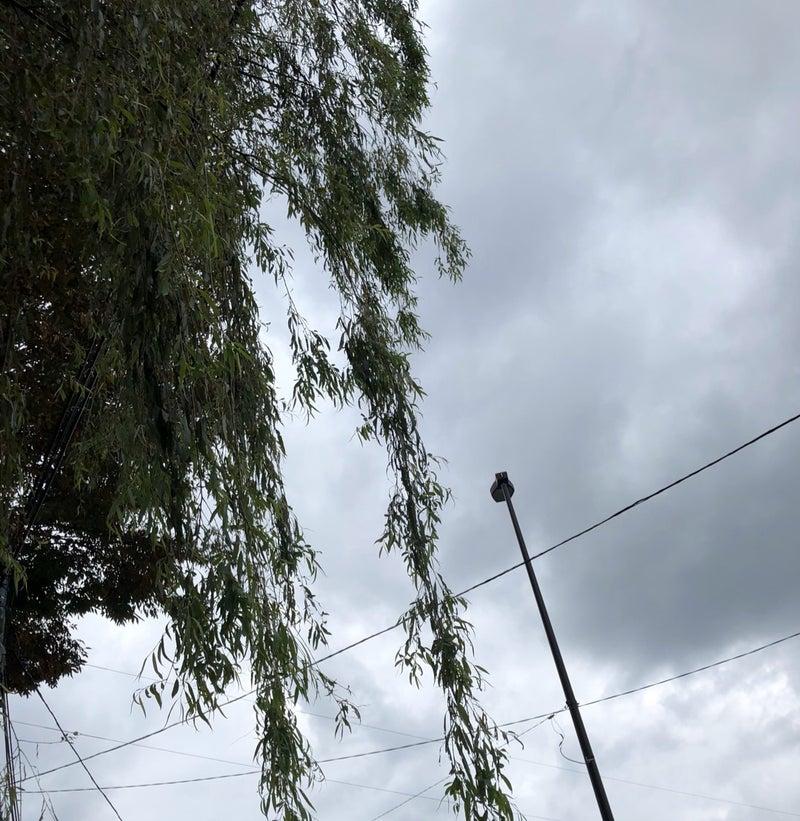 天気 武蔵野 市