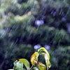 雨の中、好きな人と行く嫌いな場所の画像