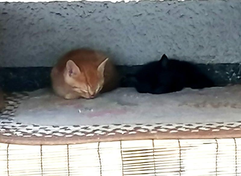 のらねこ蛇口を〆るには   つかねこ動物愛護環境福祉事業部 〜人と動物 ...