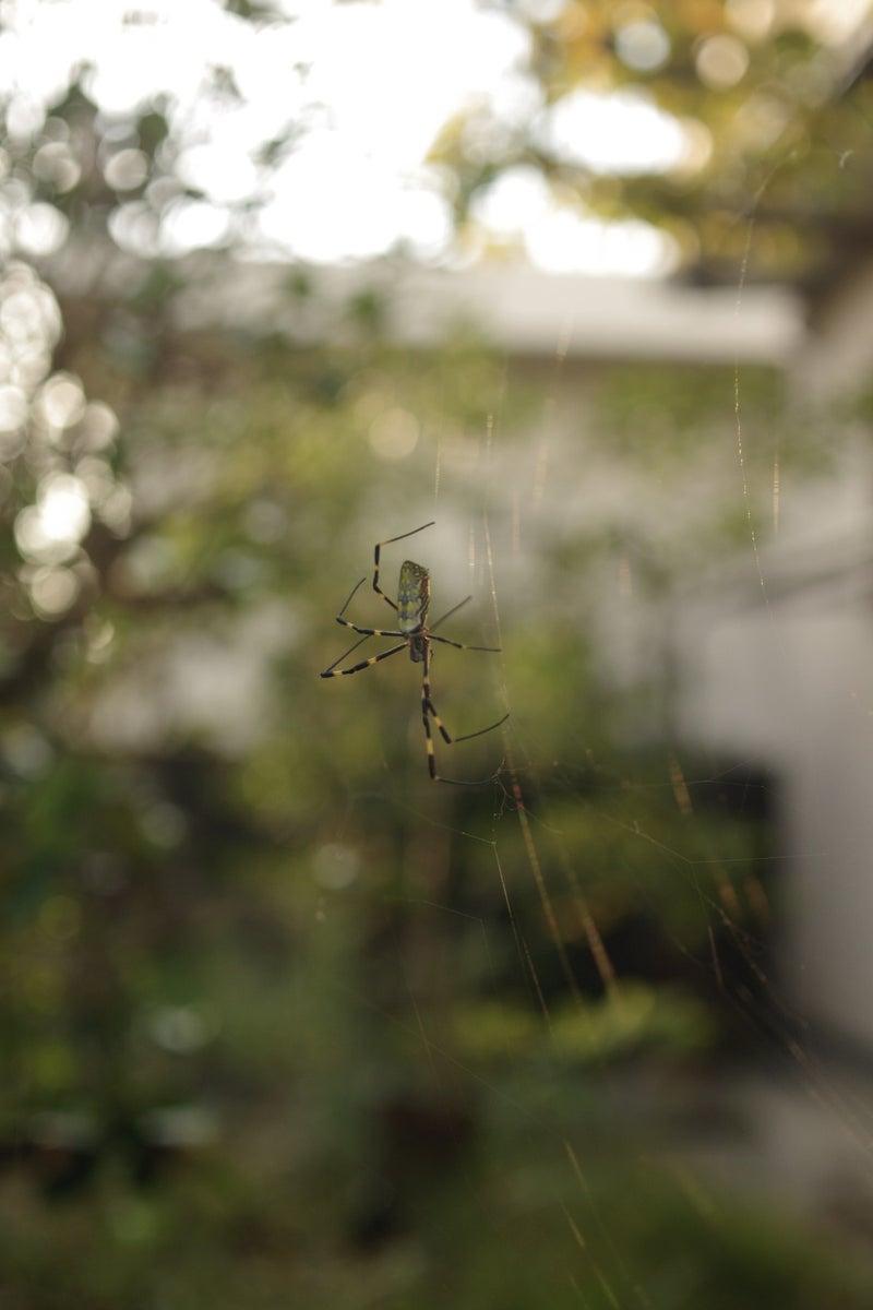 逆光の女郎蜘蛛