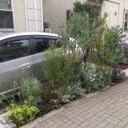 画像 駐車場、植栽等 の記事より 2つ目