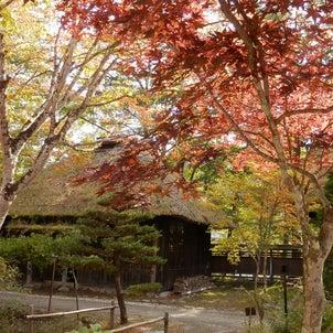 日本红叶温泉旅游の画像