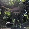 日本の樹木とその文化。の画像