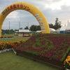 第31回久米島マラソンに参加しましたの画像