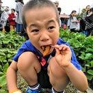【鶴見緑地公園 食育プロジェクト さつまいも】の記事より