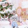 わんこと写真〜クリスマス撮影会〜の画像