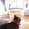 【つれづれ】白い床(ちょい辛口)の画像
