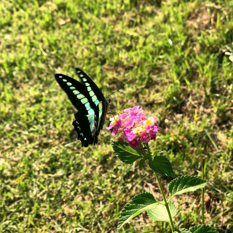 蝶に変身したイメージ