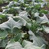 野菜が甘くなる秘訣の画像
