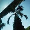 【燃える首里城】沖縄に祈りをの画像