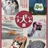 市川J:COMさんに取材がありました^_^BASACイヌ犬いぬ展の画像