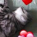 猫が好き。変身体験LOVE。80's洋楽LOVE。