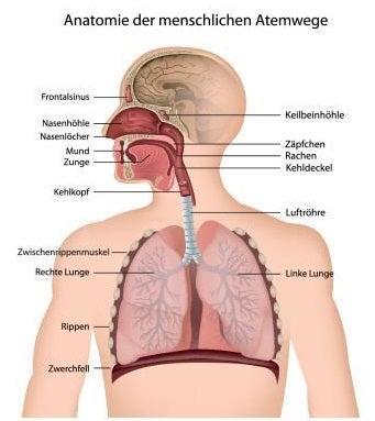 PM2.5の体への影響
