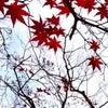 令和元年立冬の季節のアロマトリートメントの画像