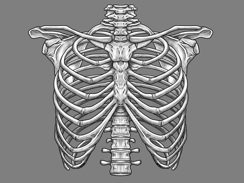 打撲 骨折 肋骨 の 違い と