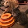 セラピーDog&Cat★札幌ヨガBLUESTARブログの画像