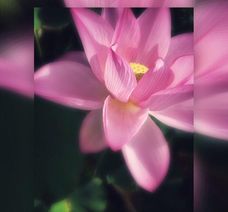 Violin -oto- mandara  創造と宇宙の調和の記事より