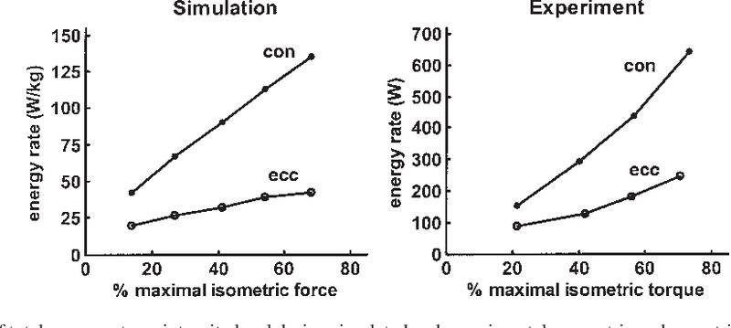 心性 収縮 求 筋の構造と機能⑤骨格筋の種類と筋張力: 虎の巻