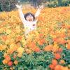 季節の花*コスモス撮影会|家族写真の出張撮影のF.O.T.Sの画像