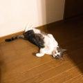 猫とワタシと時々ムスメ