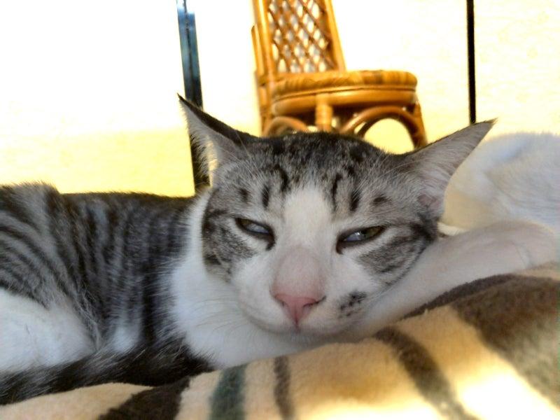 白目で寝る猫 image