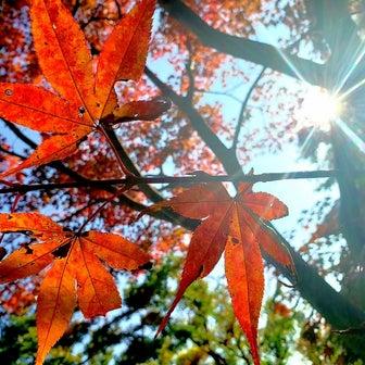 秋さんぽ。
