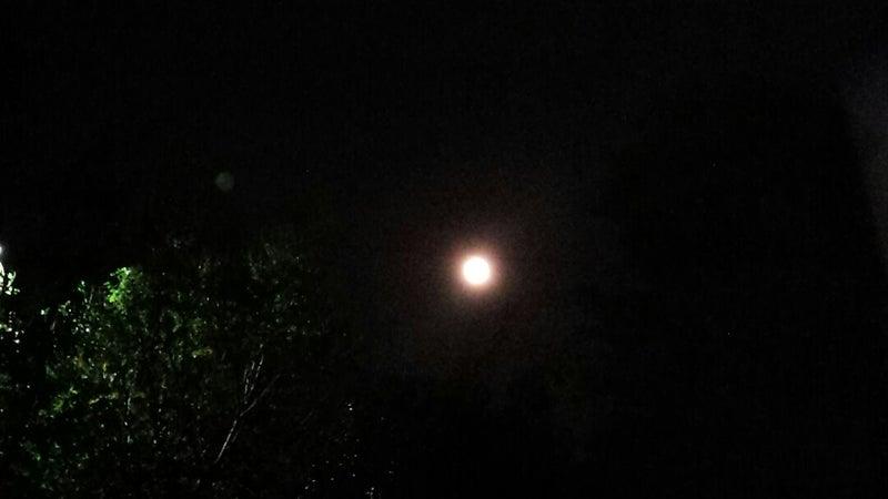 おう し 座 満月
