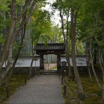 京都 竹の寺 地蔵院~苔アート