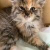 猫の急患様の画像